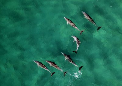 SingleTrips-Tenerife-Dolfijnen