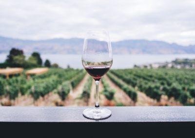 SingleTrips-Tenerife-Wijn Bodega-min